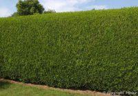 Exemple de devis plantation de haie